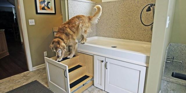 6 Versteckte Gefahren für Ihren Hund in Ihrem Haus