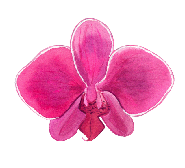 Pink-intense-orchid.png