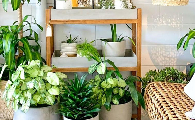 8 Types of Indoor Ornamental Plants That Can Refresh Your Home