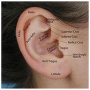 Ear-External
