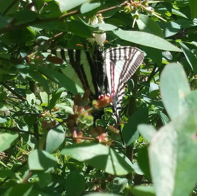 butterfly-mystery-2020-2