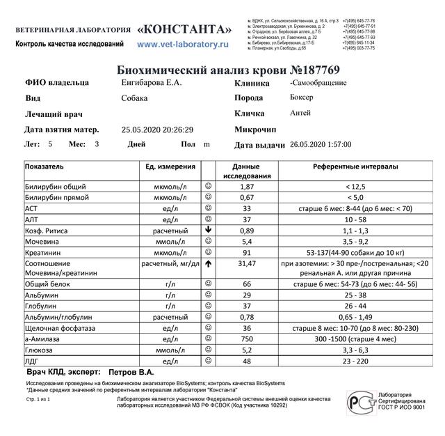 Москва, Антей, кобель, 01.02.2015 г.  Screenshot-20200527-225430-2
