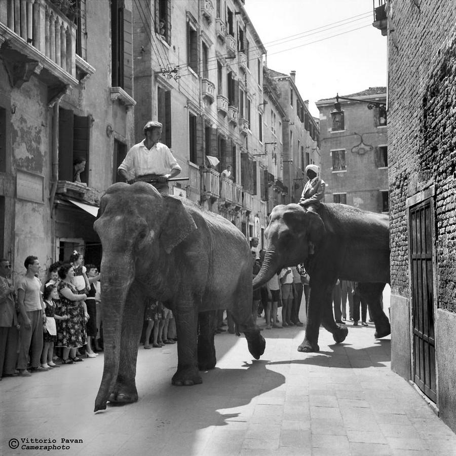 Редкие фотографии известных людей, отдыхающих в Венеции в 1950-60-е годы 24