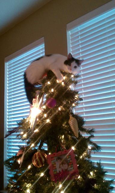 聖誕樹長貓系列,不會長出貓咪的聖誕樹不是一棵好聖誕樹 6