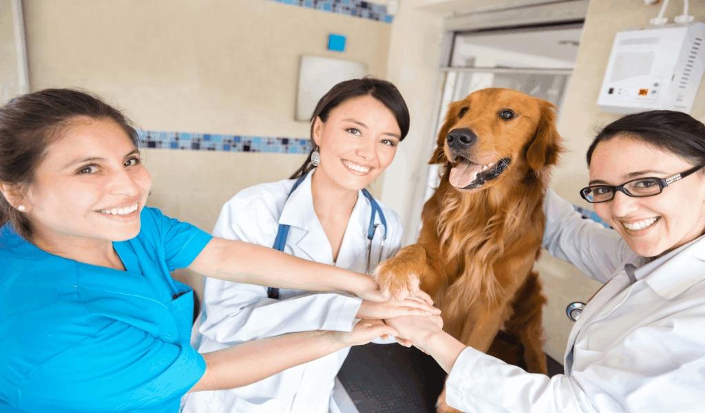 Healthy Pets Dog