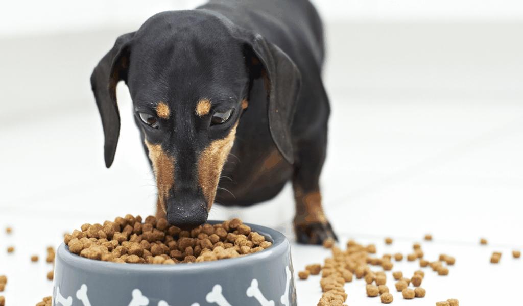 VET Best Pet Food Market