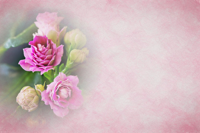Flowers-Pink-02