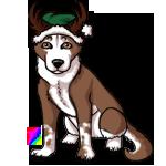 husky2