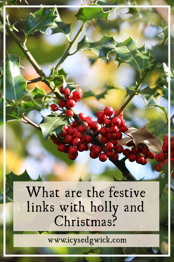 Holly and Christmas go together like bacon and eggs...but where did the links first come from? And who is the Holly King, who must battle the Oak King?