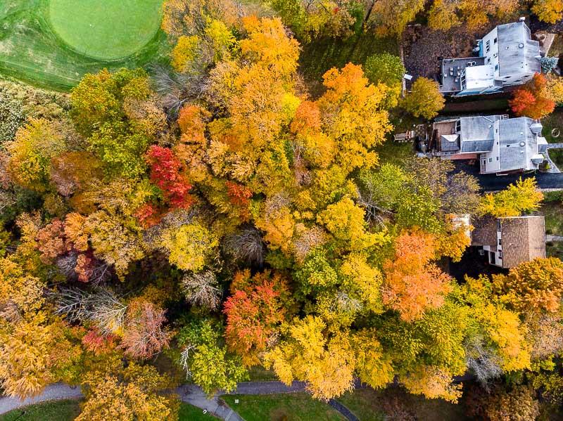 colonphoto-com-004-foliage-autumn-season-Verona-Park-in-New-Jersey-20191025-DJI-0745