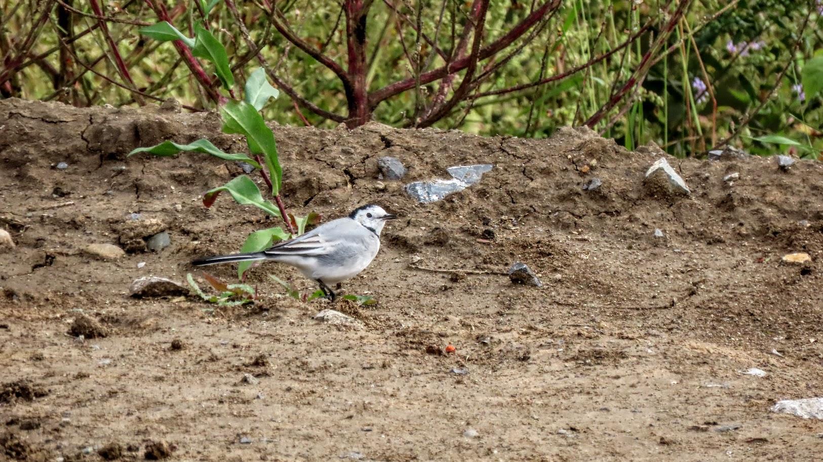 Зеленоглазый и птички 35846436