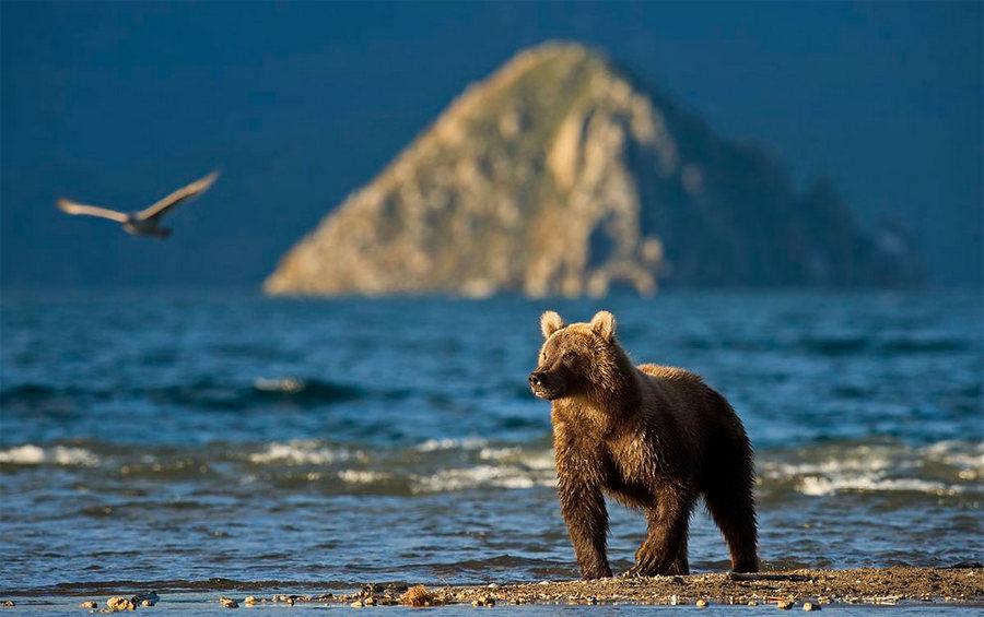 Невероятные фотографии медведей 13