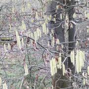 Весна в объективе в приходском экологическом парке при храме Св. мч. Уара поселка Вешки Мытищинского благочиния