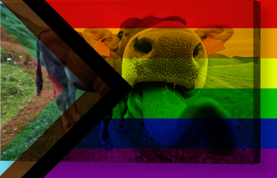 nouveau drapeau LGBTI ++ plus inclusif