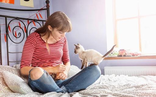 Halten Sie Ihre Katze beschäftigt