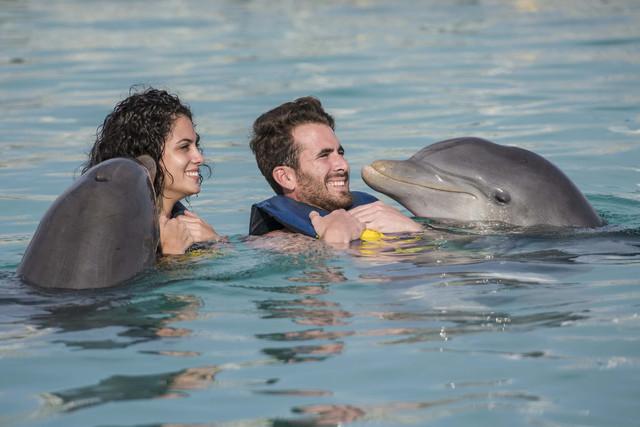 Delfines-OK-Prop