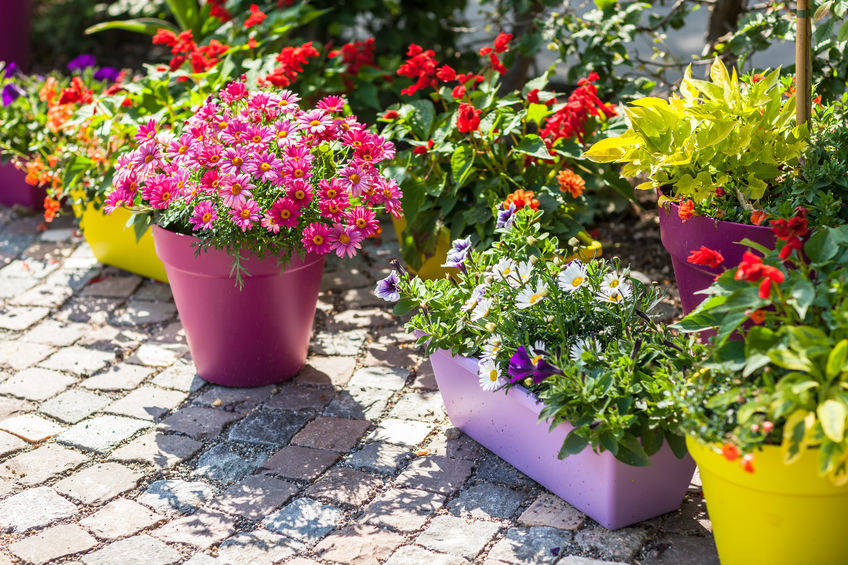 Enhance the Beauty with the Colorful pots
