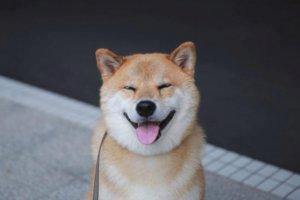 Отличительные особенности собачника