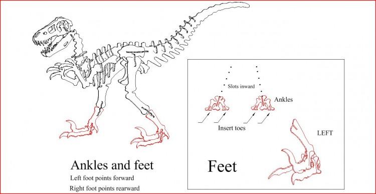 Feet anatomy DINOSAUR PUZZLE