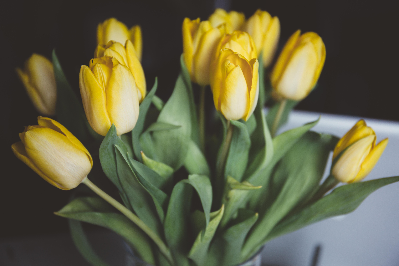 tulips-1208205