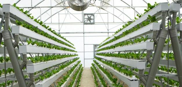 Added Better Farms / Добавлены улучшенные фермы!