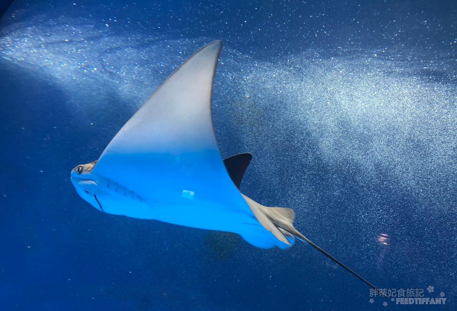 Xpark水族館 美麗滑行的魟魚