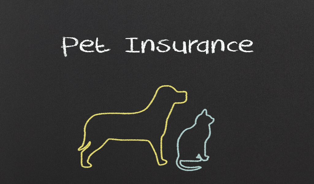 Pets Insurance Reviews