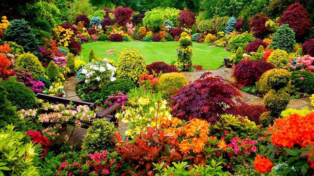 18 Outdoor Ornamental Plants That Are Easy To Care For