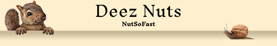 banner-Nut-The-Squirrels.png