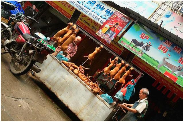 china-carne-perro-desollamiento-crueldad-maltrato-animal-1549997839