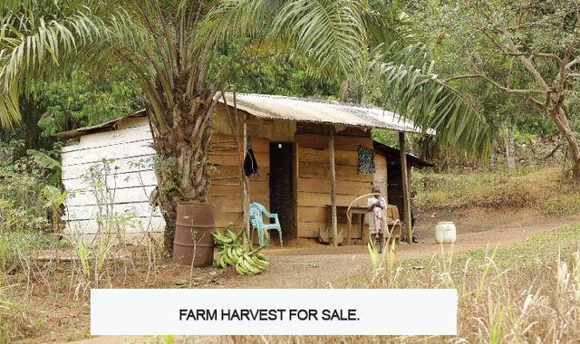Farm-harvest-for-sale