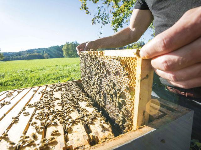 ciatoscana-api-apicoltura-miele