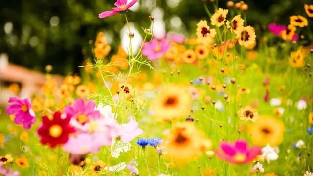 Разноцветное лето в МОУ Усть-Теленгуйской СОШ