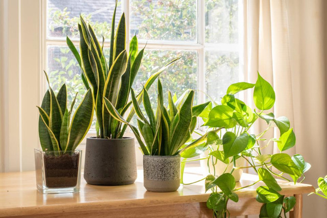7 Important Things to Care for Indoor Plants