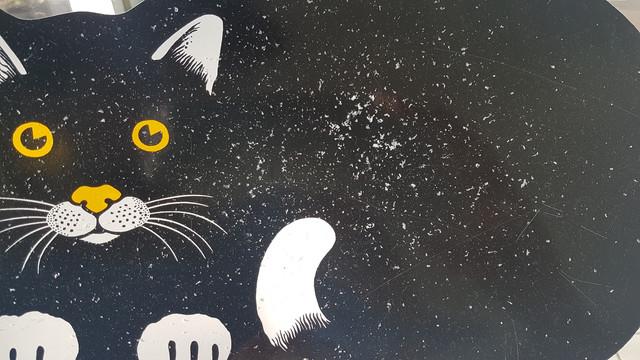 cat-14-Jan