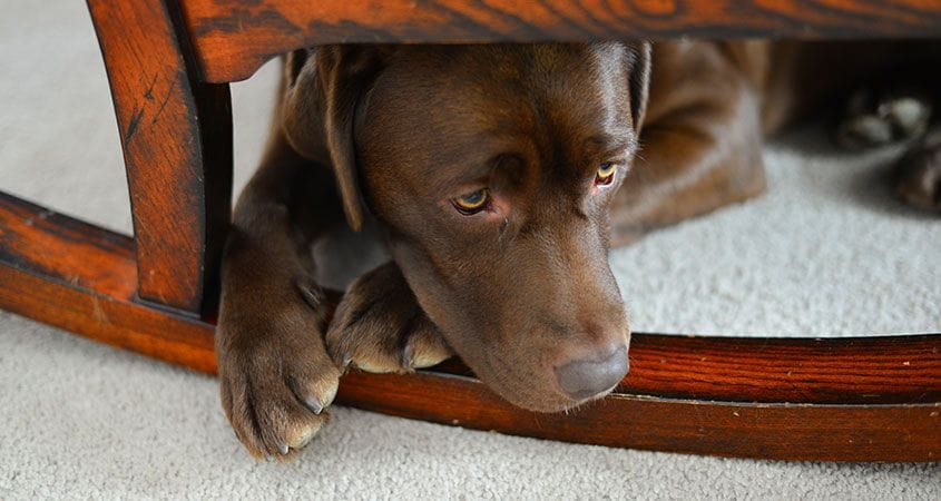 My dog ​​is afraid of other dogs: what can I do?