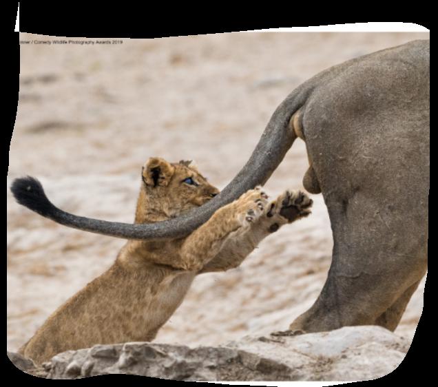Divertiamoci con gli animali - Pagina 3 Screenshot-20191117-230612