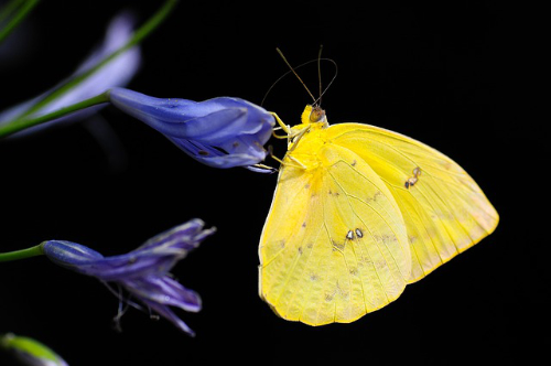 An image of a yellow butterfly.