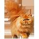 https://i.ibb.co/kG93tX8/cat-red.png