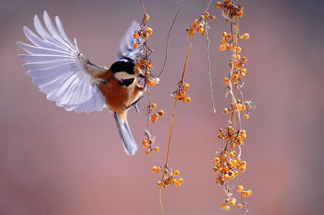 uccello-rilke