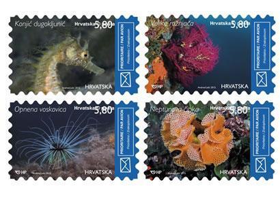 2015. year HRVATSKO-PODMORJE-II-NEPTUNOVA-IPKA-OPNENA-VOSKOVICA-VELIKA-RO-NJA-A-KONJI-DUGOKLJUNI