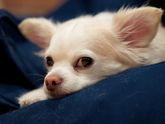Depression beim Hund