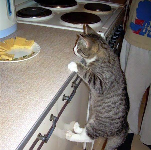 Коты, которых поймали на горячем - 45 отчаянных фотографий - 24
