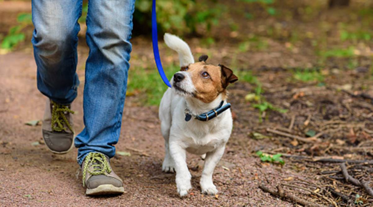 Best Ways To Transfer Your Pet By Road