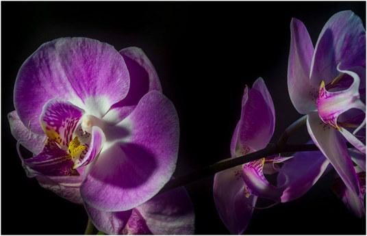 parfum-osje-aj-cvije-a-blog