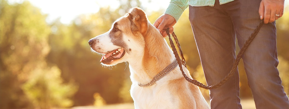 WRITE DOWN THESE TIPS TO WALK YOUR DOG