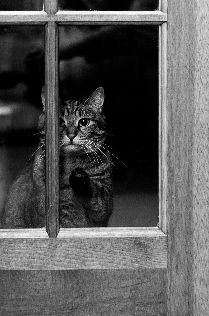 Таинственная кошачья жизнь в чёрно-белых фотографиях-62