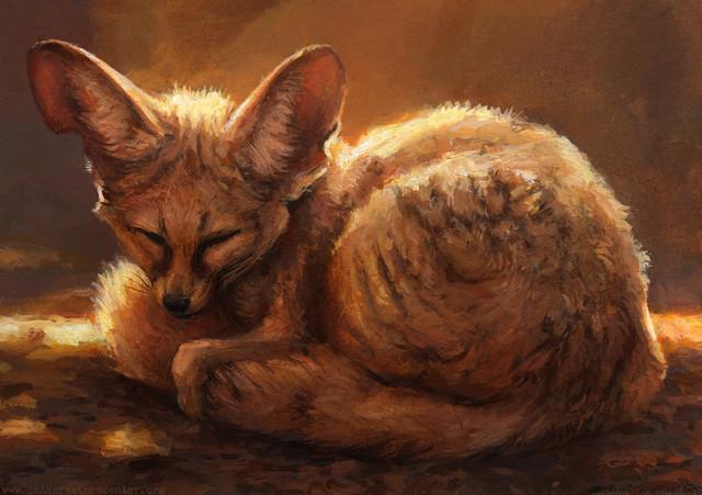 Fennec-Fox-1.jpg