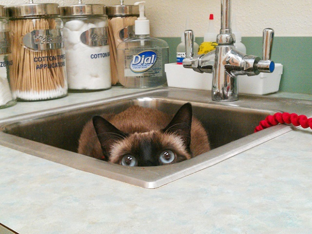 funny-cat-at-the-vet-04