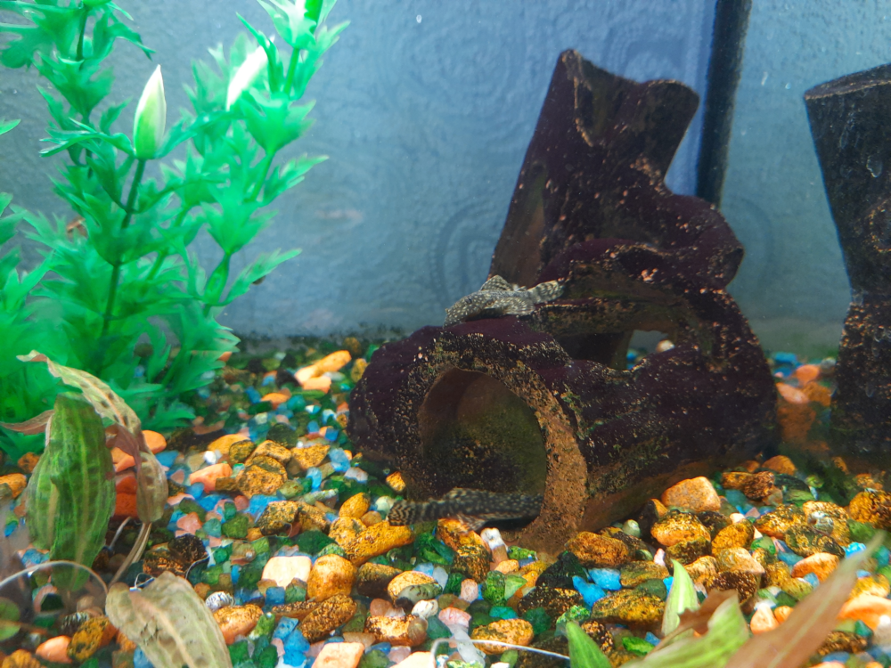 Aquarium-1.png